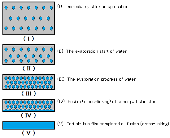Dry change of the emulsion water-based paints