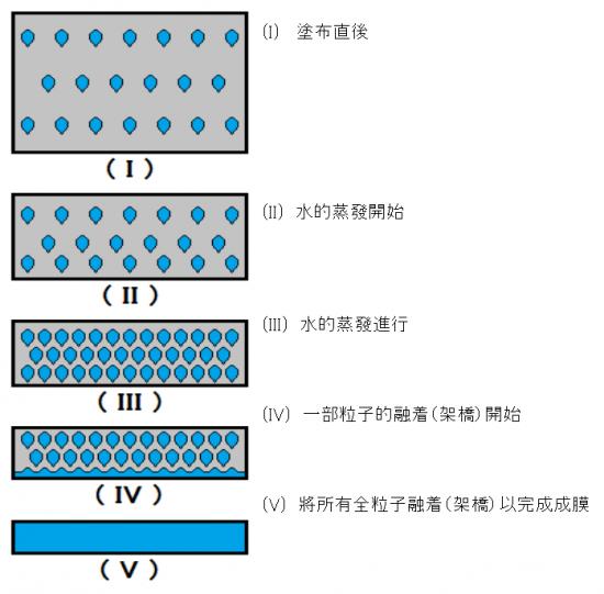乳化水性塗料的乾燥變化