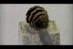 Forcing test of the plant - heating of pine cones